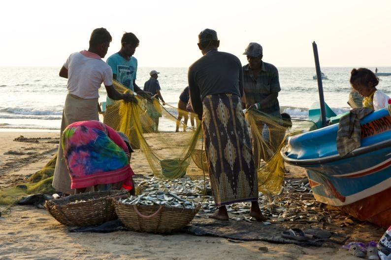 vissers van Negombo