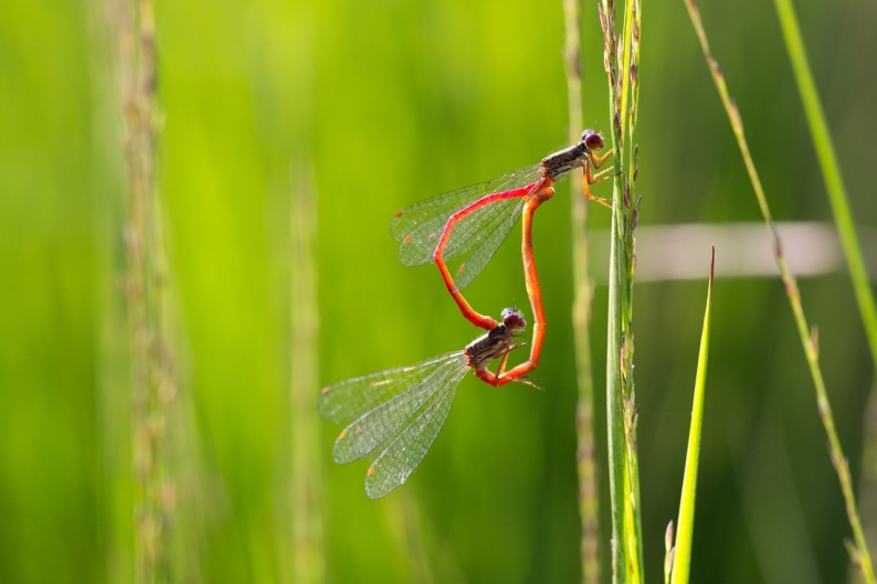20130816-hapertsevennen-insect-78