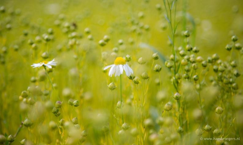bloem1307-03