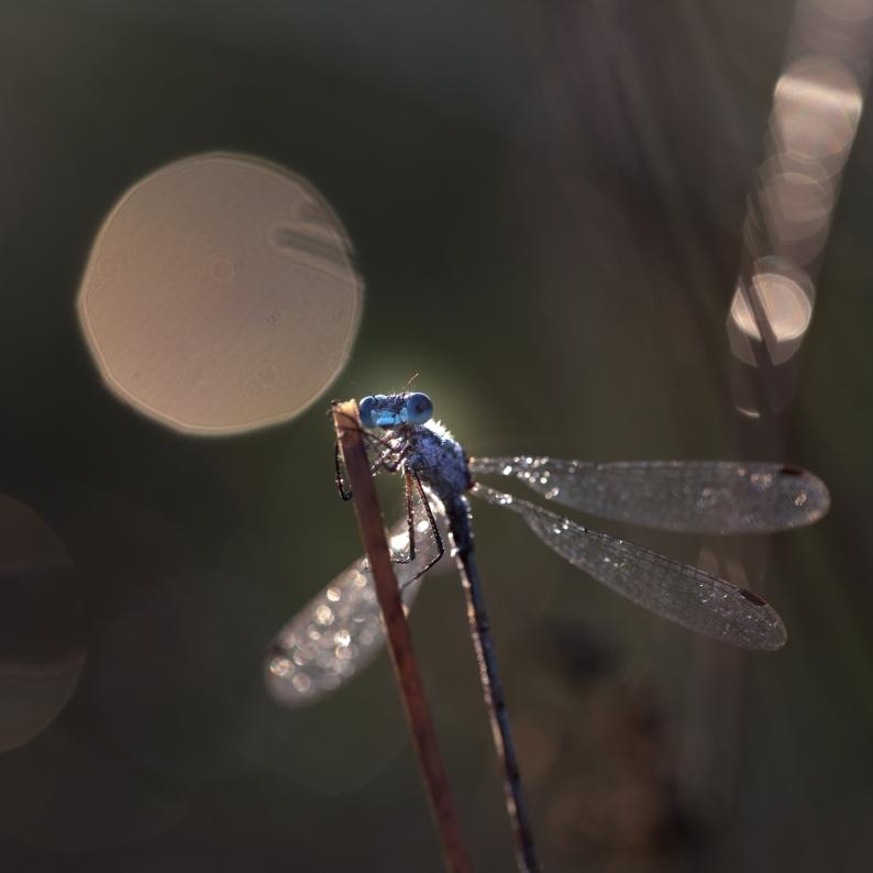20130816-hapertsevennen-insect-19
