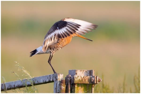 portfolio-weidevogels